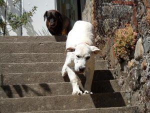 Mi perro tiene miedo a las escaleras