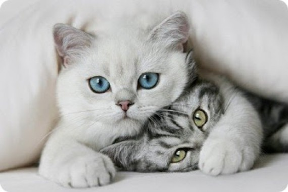 Observa la actitud del gato