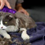 Por qué debes cepillar el pelo del gato en verano
