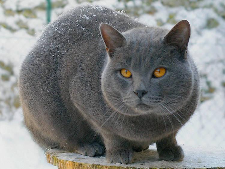 Por qué es tu gato miedoso