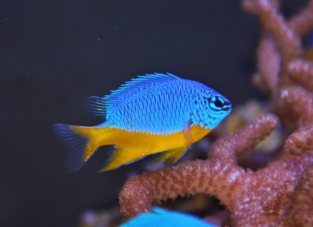 Principales especies de peces de agua salada