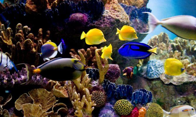 Los principales peces de agua salada que puedes tener en for Especies de peces