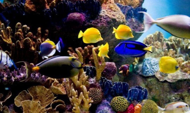 Los principales peces de agua salada que puedes tener en for Peces que no necesitan oxigeno