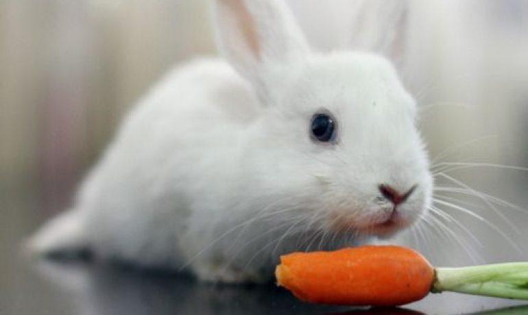 Qué come un conejo