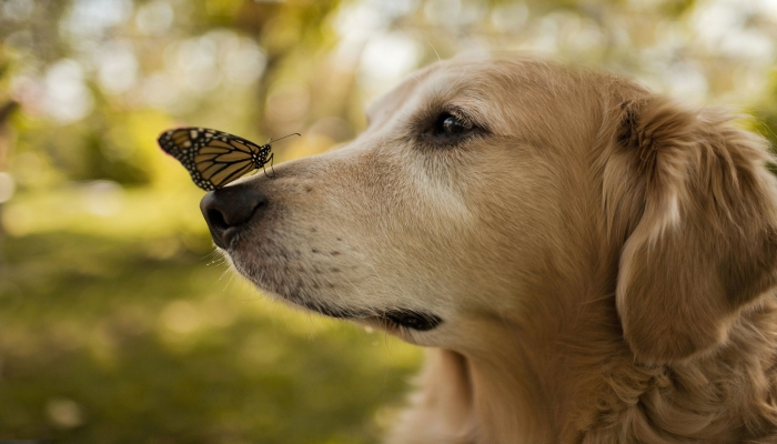 Qué cuidados necesita la nariz de tu perro