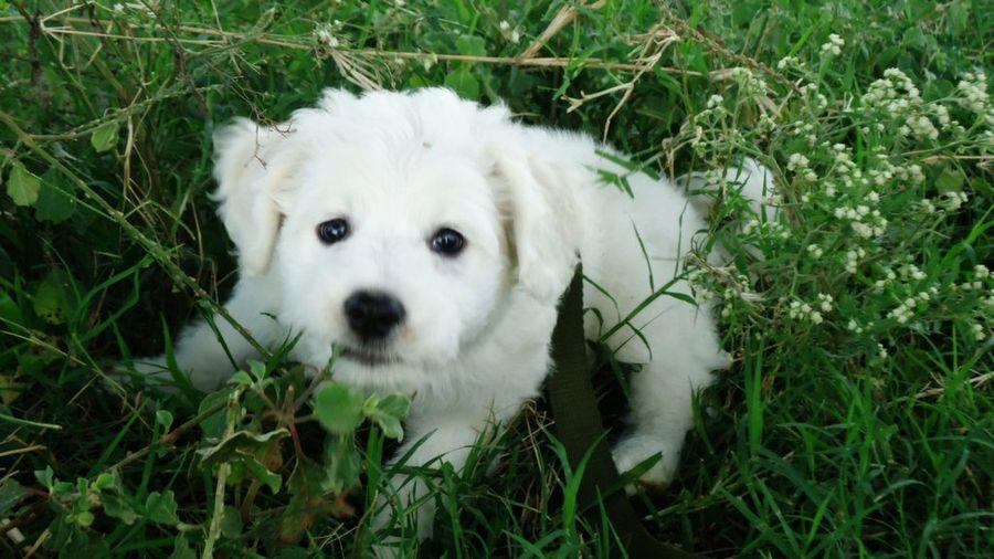 Qué debes hacer ante una picadura de alacrán en perros