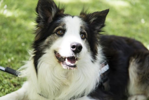 Qué es el síndrome de Shaker en perros