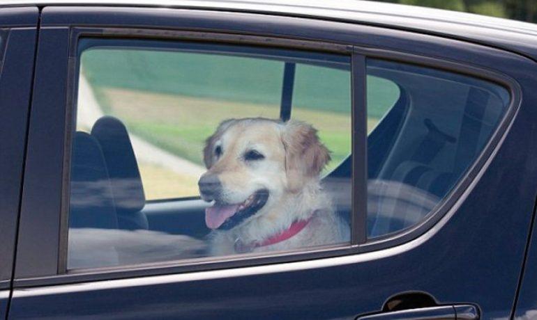 Romper la ventanilla de un coche para salvar a un perro