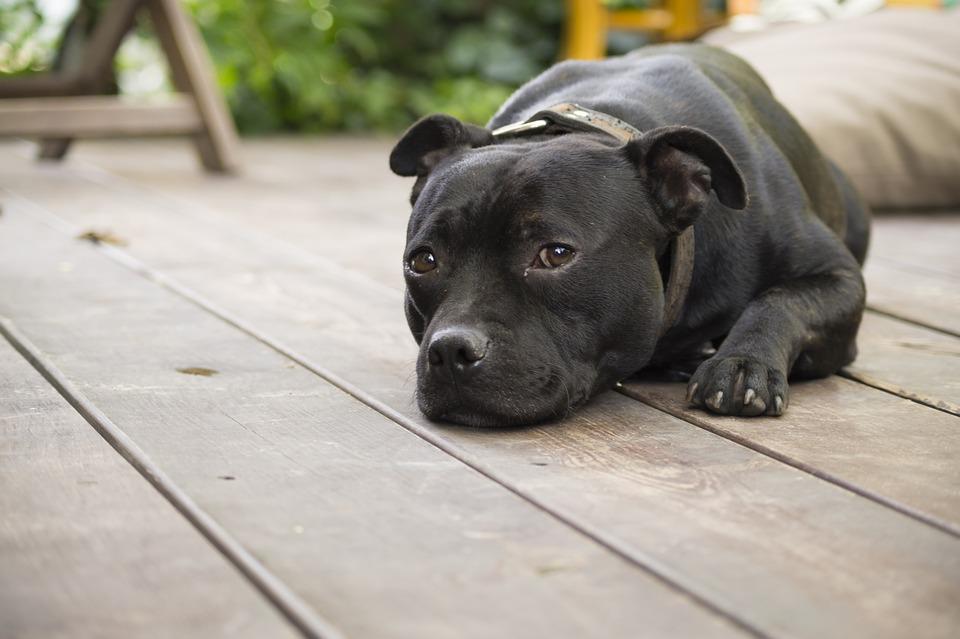 Síntomas de la artrosis en perros