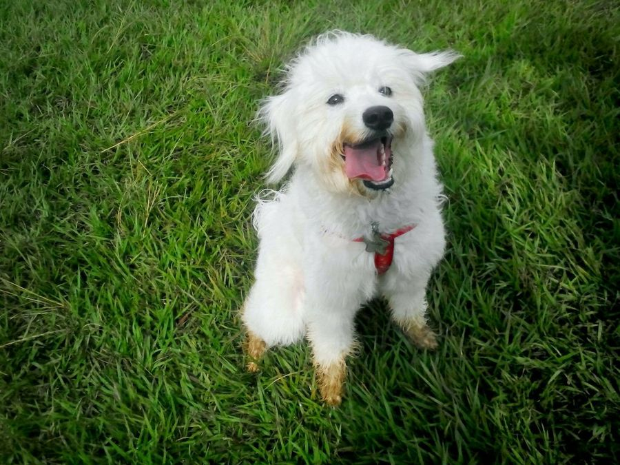 Síntomas y tratamiento de la picadura de alacrán en perros