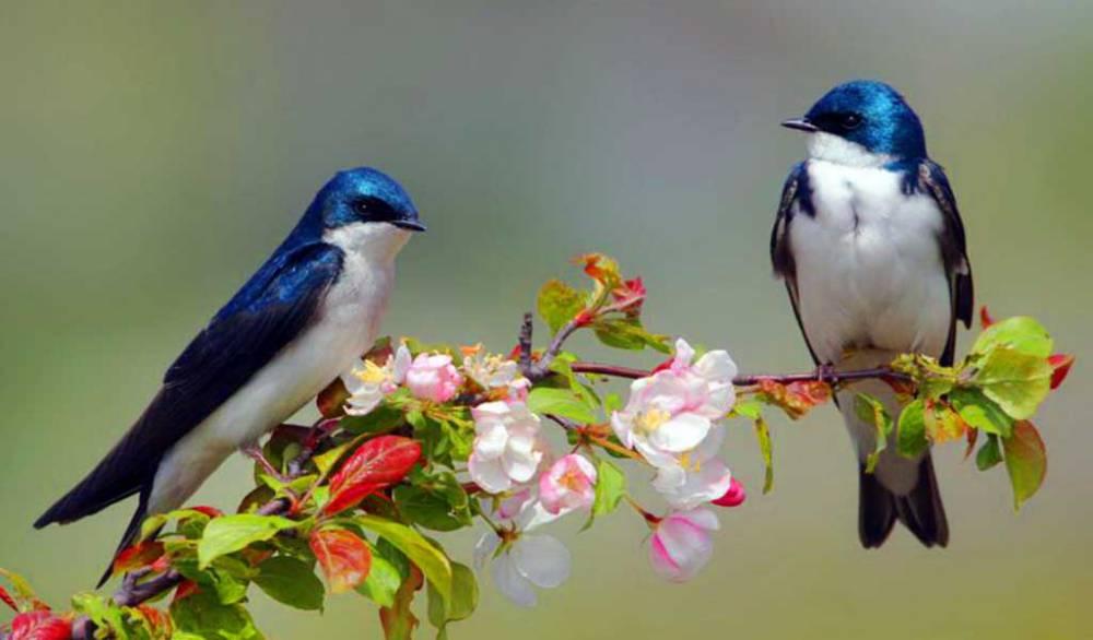 Señales de enfermedad en las aves