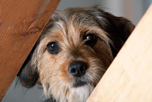 Terapias para perros con miedo