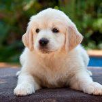 Todo sobre la artritis en perros