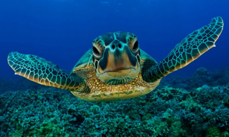 Todo sobre las tortugas acuáticas como mascotas