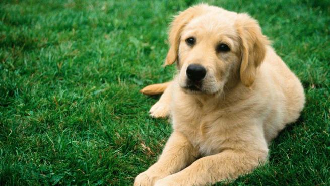 Tratamiento de la artritis canina