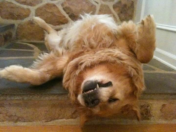 Tratamiento de la artritis en los perros
