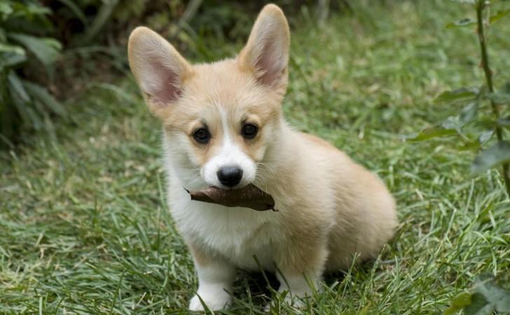 Tratamiento de la torsión gástrica en perros