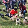 Un niño autista que adora a los pugs recibe una visita especial por su cumpleaños