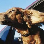 Viajar con perros al extranjero