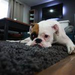 alicante prohibe perro 12 horas en casa