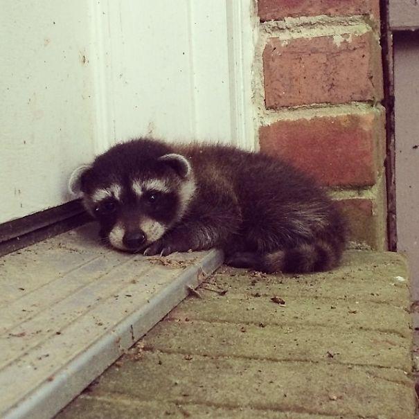 animal escaleras de casa