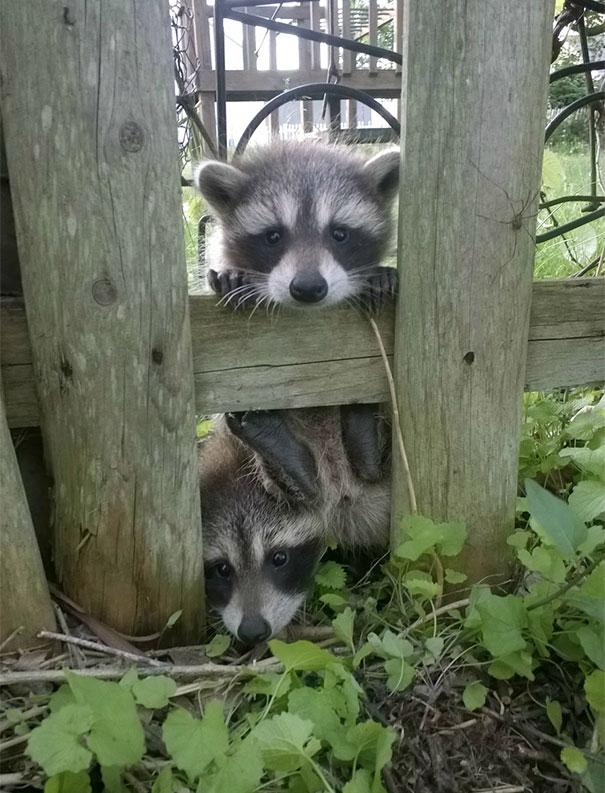 animales vecinos