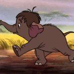 bebé-elefantes que te conquistarán