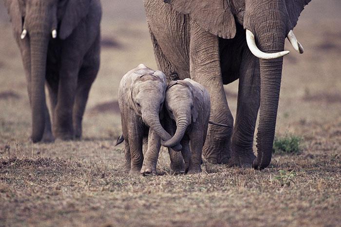 bebe elefantes hermanos