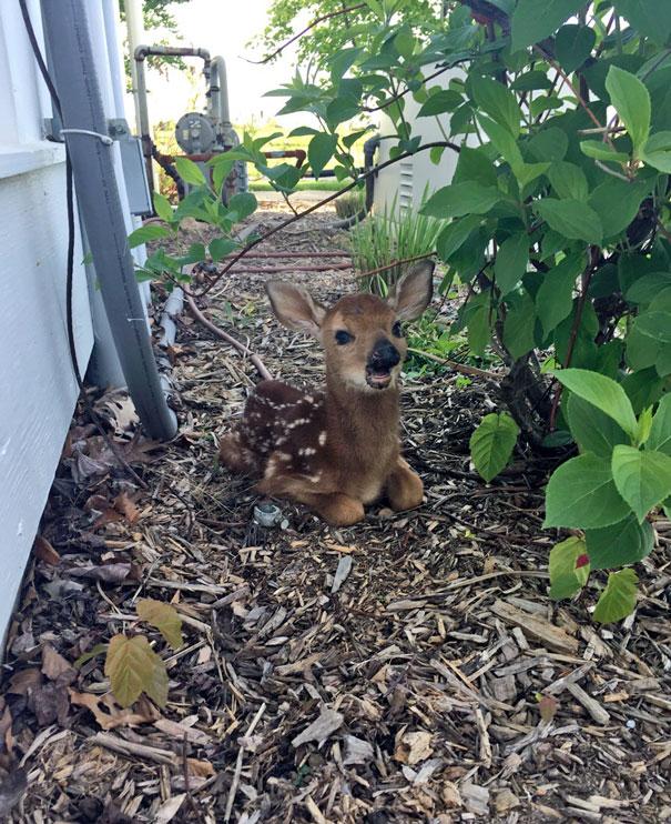 ciervo en el jardin