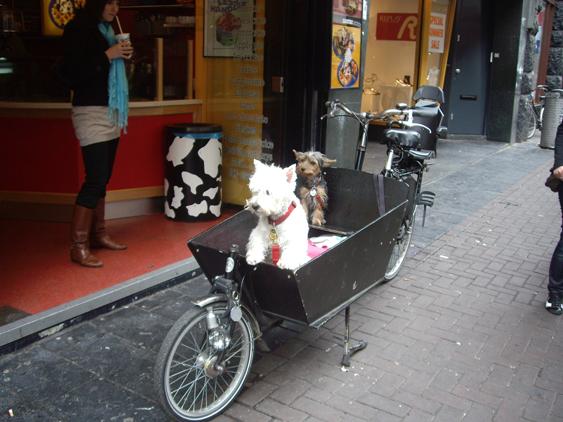 ciudades más dogfriendly del mundo Amsterdam