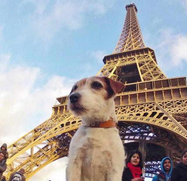 ciudades más dogfriendly del mundo parís