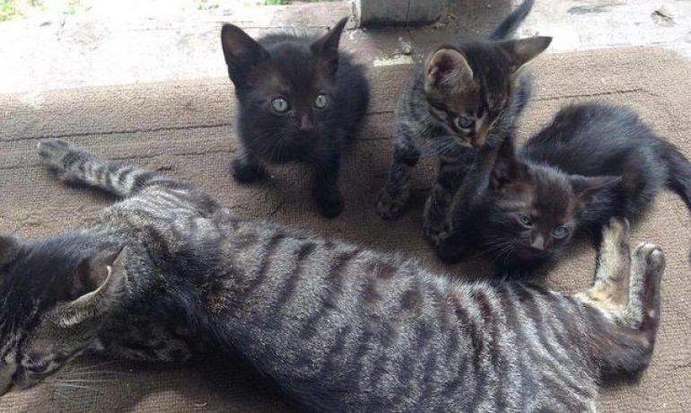 de una campada a un rescate de gatitos