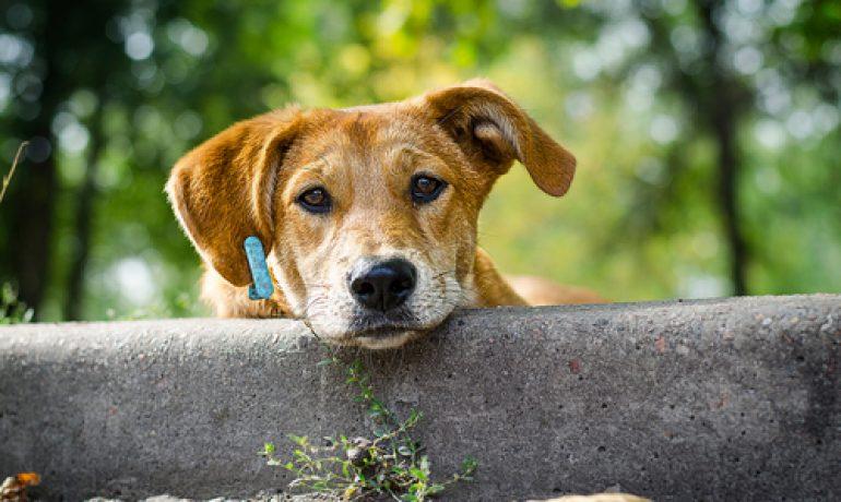 el Día del Perro sin Raza