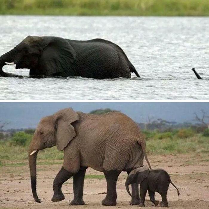 elefante bebe en el agua