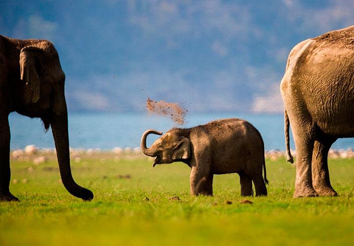 elefante bebe jugando con tierra