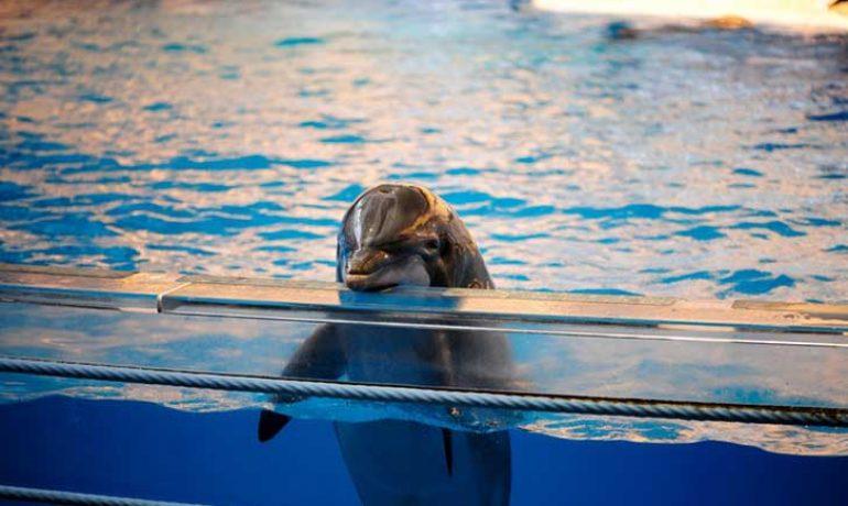 francia prohibe delfin y orcas en cautiverio