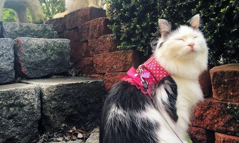 gato se enamora de su vecina