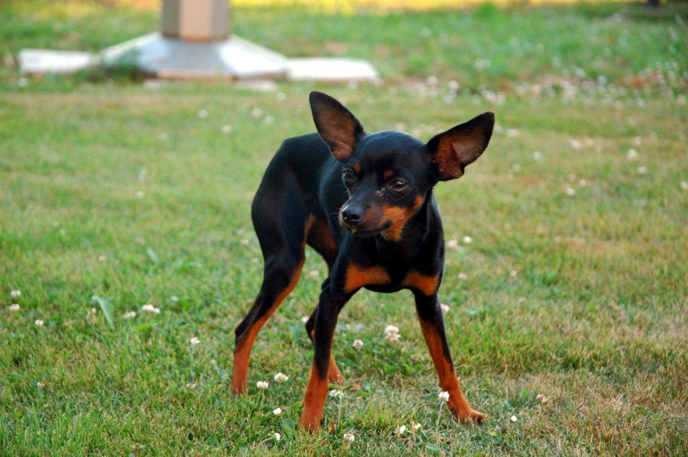 la anorexia canina