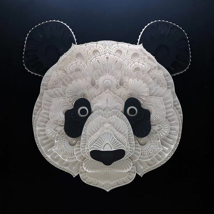 oso panda patrick cabral