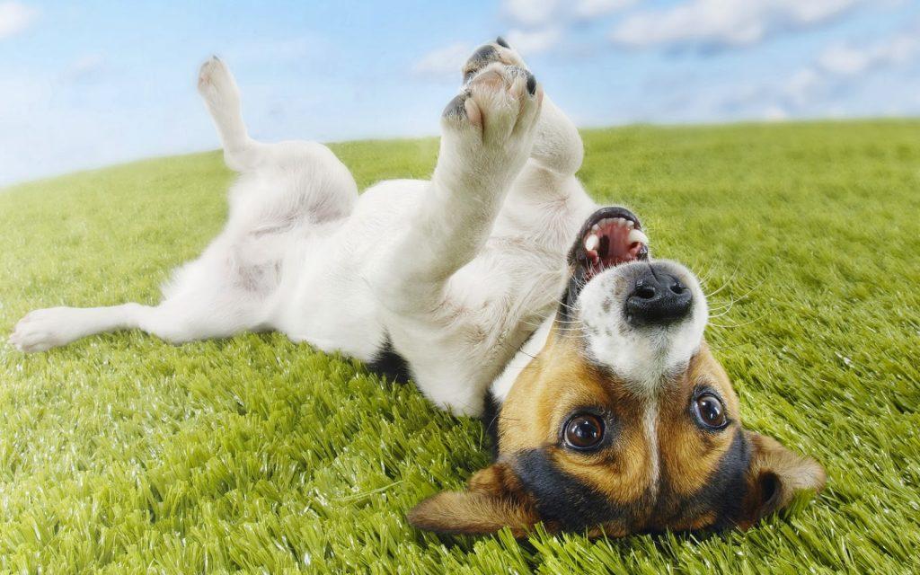 prozac para perros