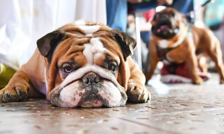se puede prevenir la giardiasis en perros