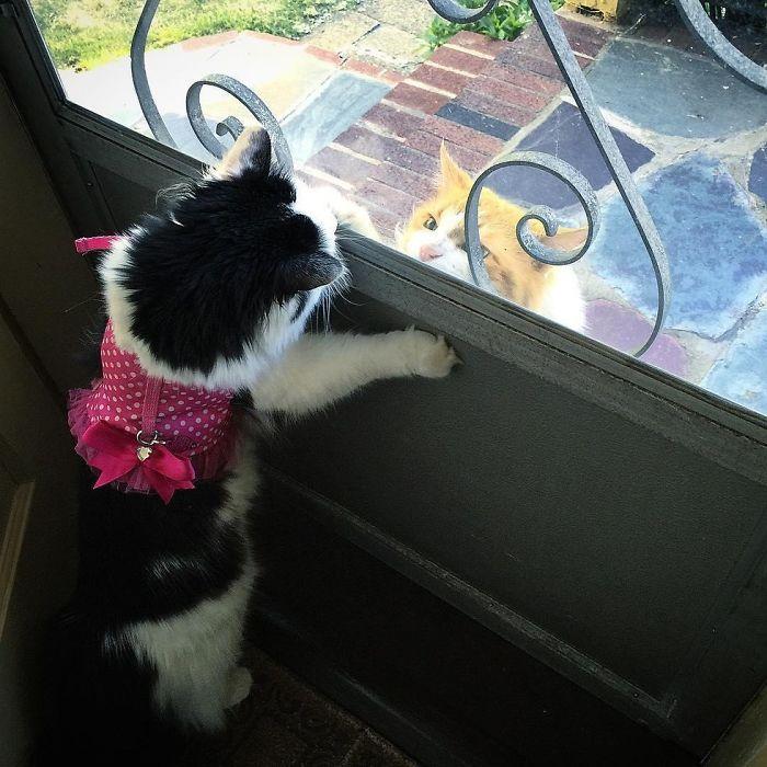 Un gato se enamora de su vecina