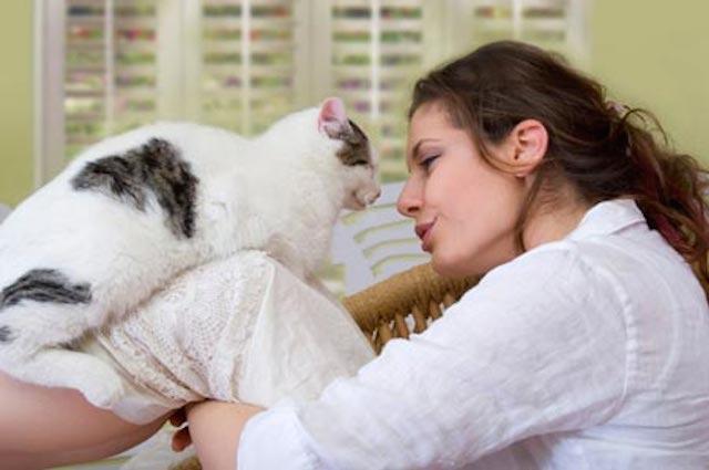 toxoplasmosis en gatos y embarazo