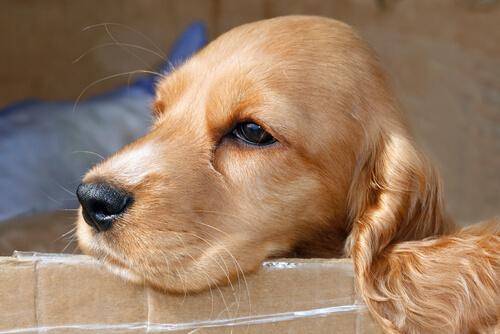 tu perro tiene pólipos o tumores nasales