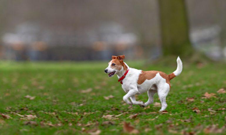 10 Consejos que debes saber antes de ir al parque para perros