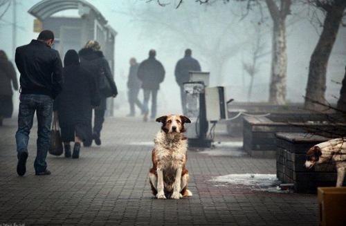 10 ideas para hacer una ciudad más pet friendly