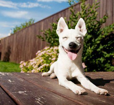 10 razones para adoptar un perro callejero