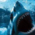 20 animales más mortíferos del mundo