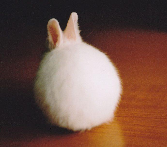 20 animales que son tan redondos que parecen pelotas
