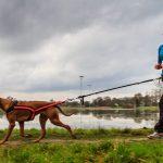 3 Consejos para empezar a practicar canicross con tu perro